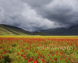 Castelluccio of Norcia in Italy.